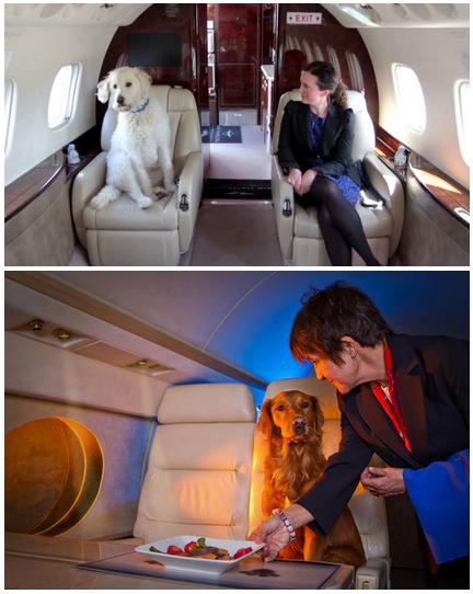 частный самолет для полета с домашним животным