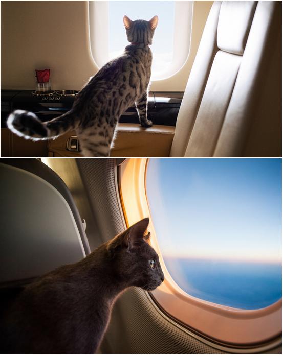 аренда частно самолета для полета с кошкой