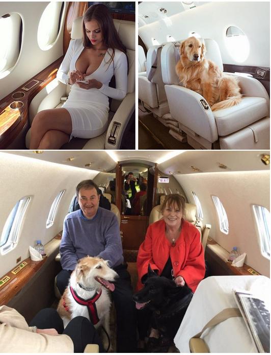 аренда частного самолета для полета с собакой
