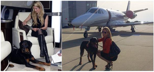 перелет с собакой на бизнес джете